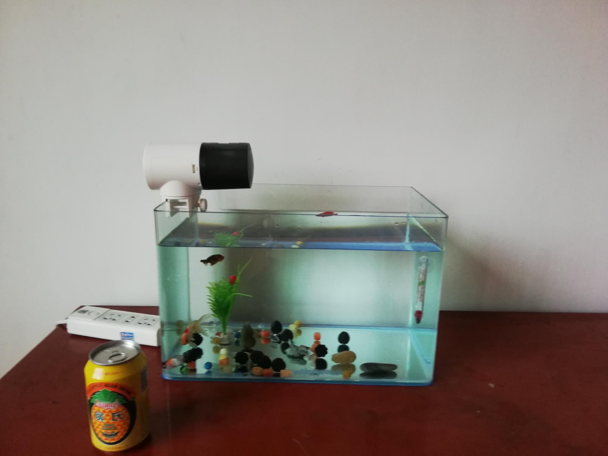 土炮箱暂弃床下热弯小缸刚刚到货 龙鱼养殖知识 龙鱼饲料第5张
