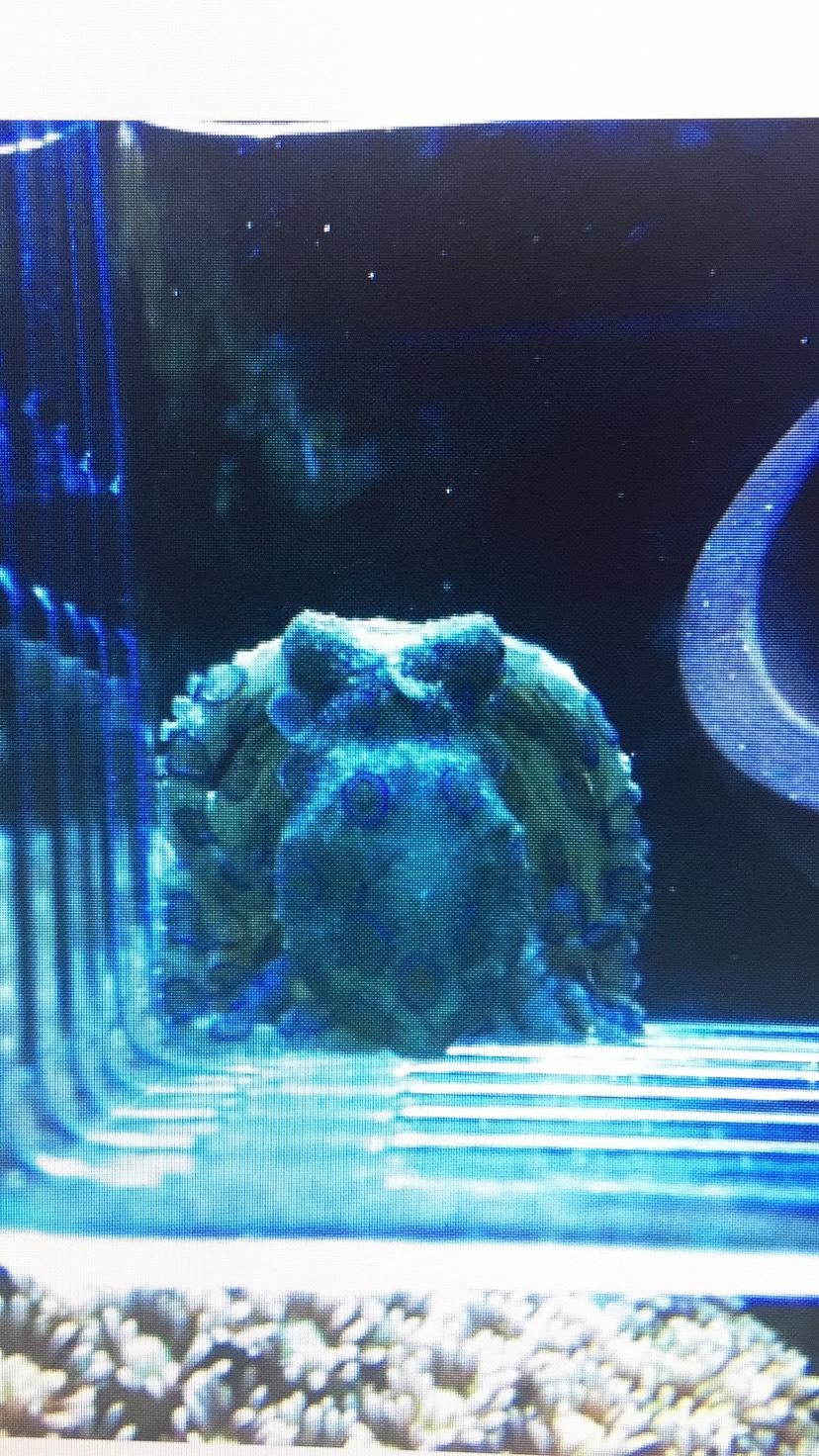 海水生态系统专业知识误区详解