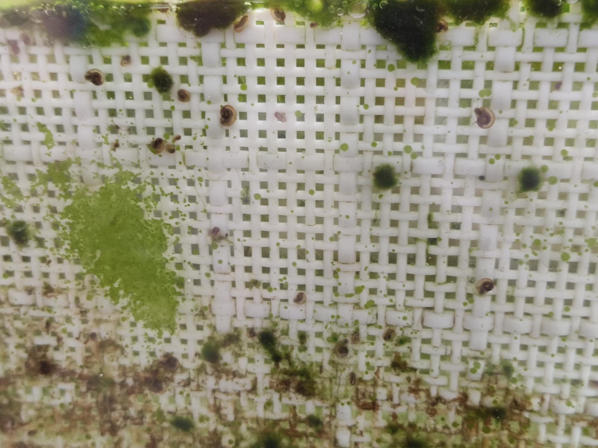 褐藻为何消失了? 台州水族批发市场 台州水族批发市场第5张