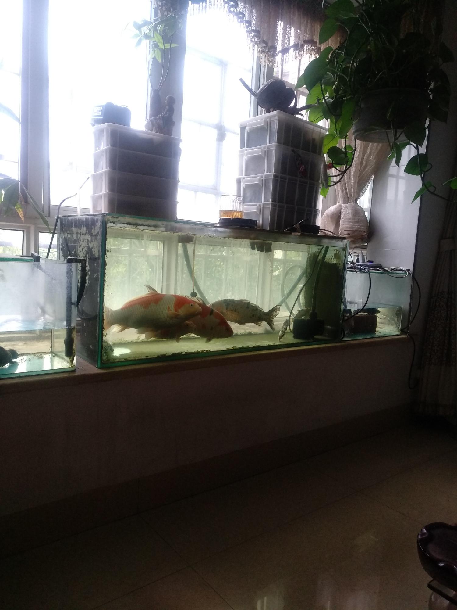 上海哪个水族店有黑云(大明天停电请看下集