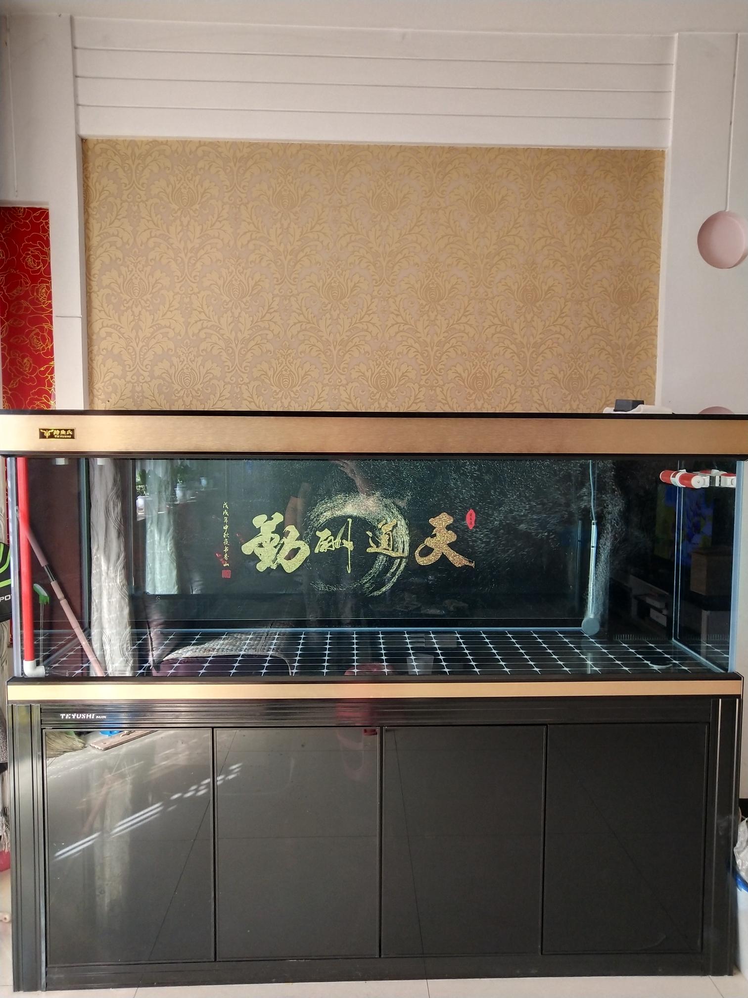 满意了 南京水族批发市场 南京龙鱼第2张