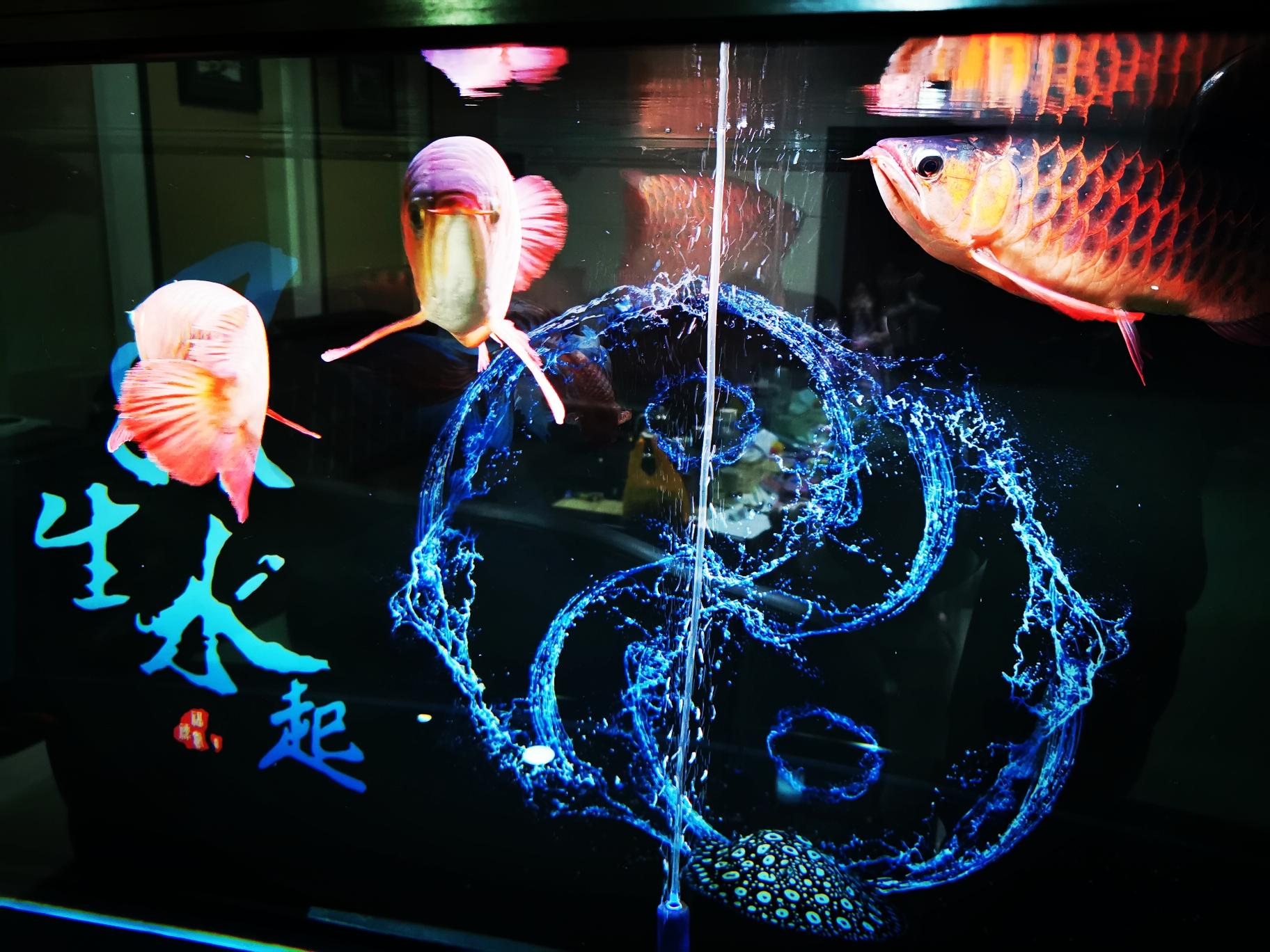 传说中的霸气侧漏[ciya] 昆明水族批发市场 昆明龙鱼第3张