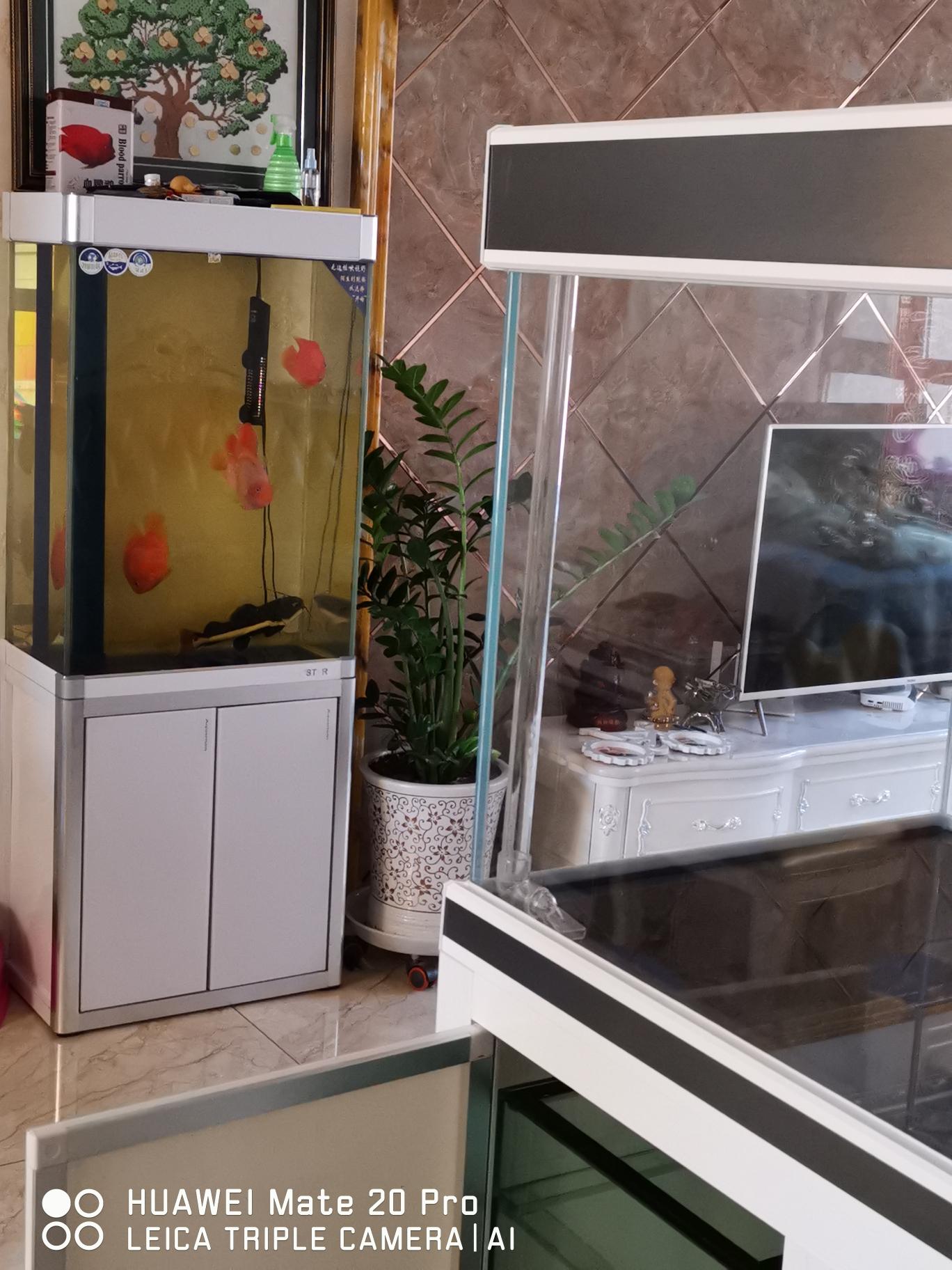 哈尔滨哪个水族店有白子黑帝开缸成功入坑 哈尔滨水族批发市场 哈尔滨龙鱼第3张