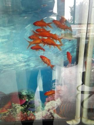 成都亚克力鱼缸团结就是力量